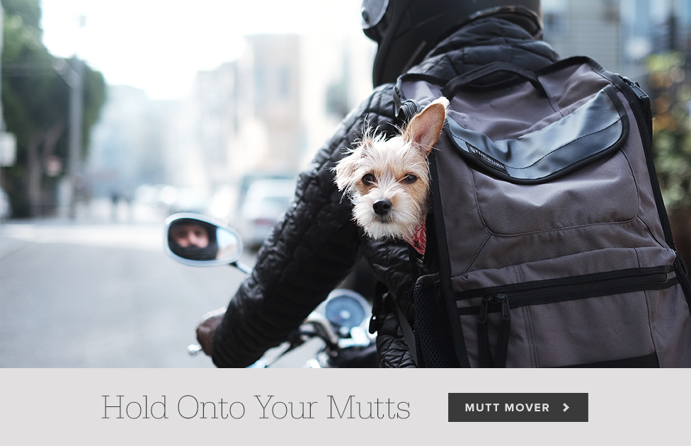 Move Your Mutt.
